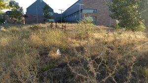 Limpieza urgente del entorno del Centro de Salud Valle de la Oliva